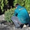Посадка растений в Донецке