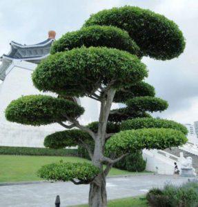 Стрижка растений в стиле Ниваки