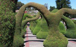 произвольная форма стрижка кустарника