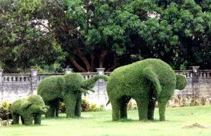 скульптурная форма стрижки кустарника