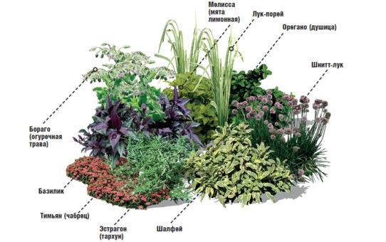 пример клумбы из пряных растений