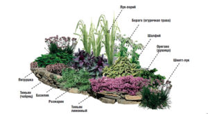 пряные растения в саду